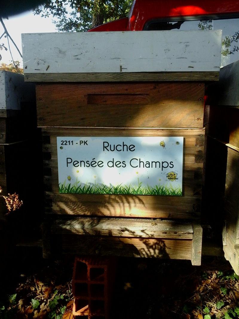 La ruche Pensée des Champs