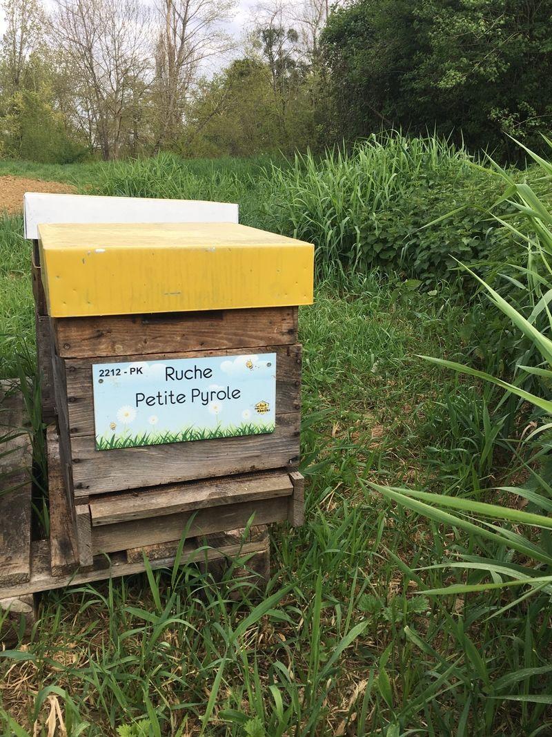 La ruche Petite Pyrole