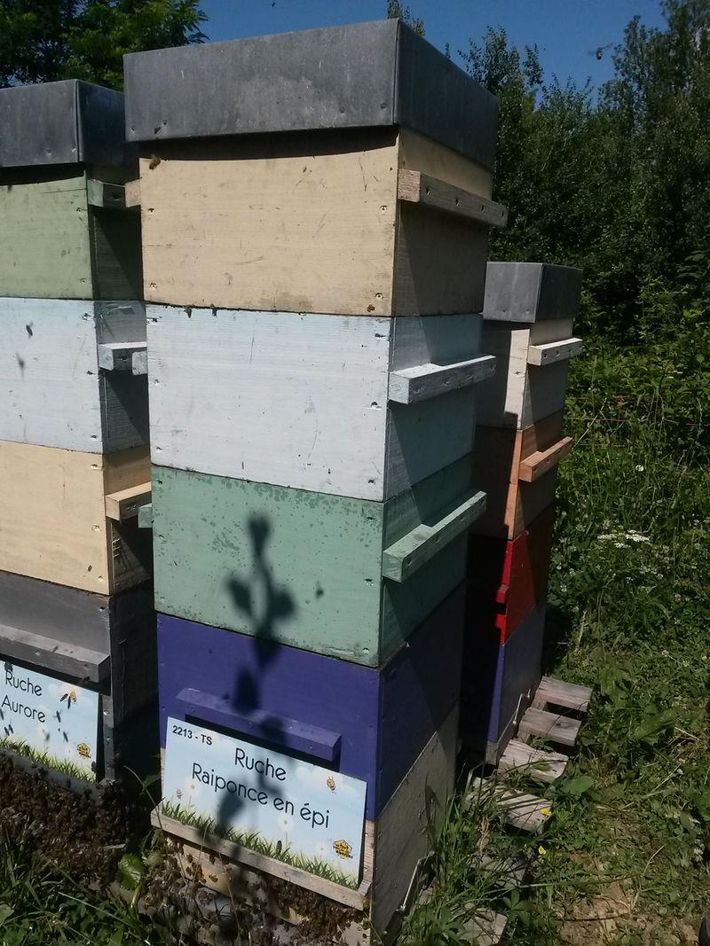 La ruche Raiponce en épi