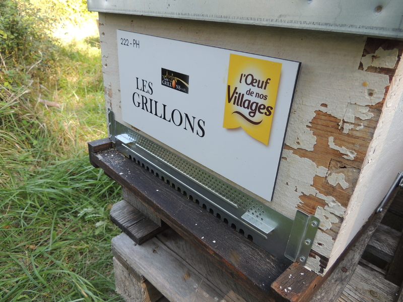 La ruche SARL LES GRILLONS