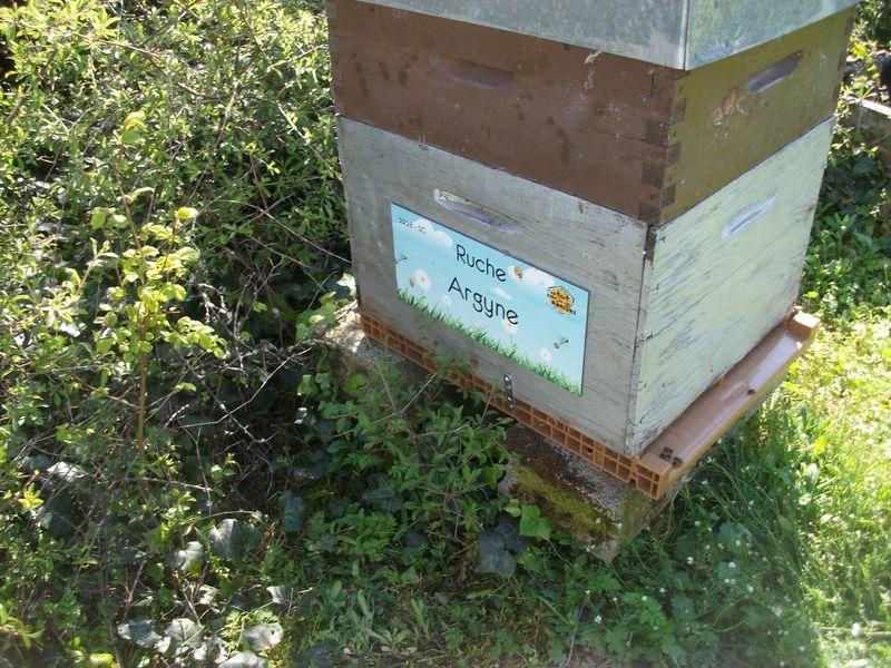 La ruche Argyne