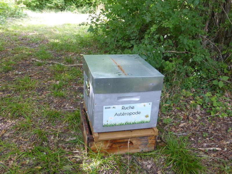 La ruche Astéropode