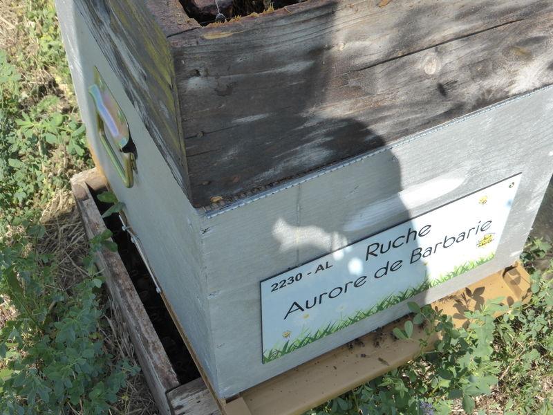 La ruche Aurore de Barbarie