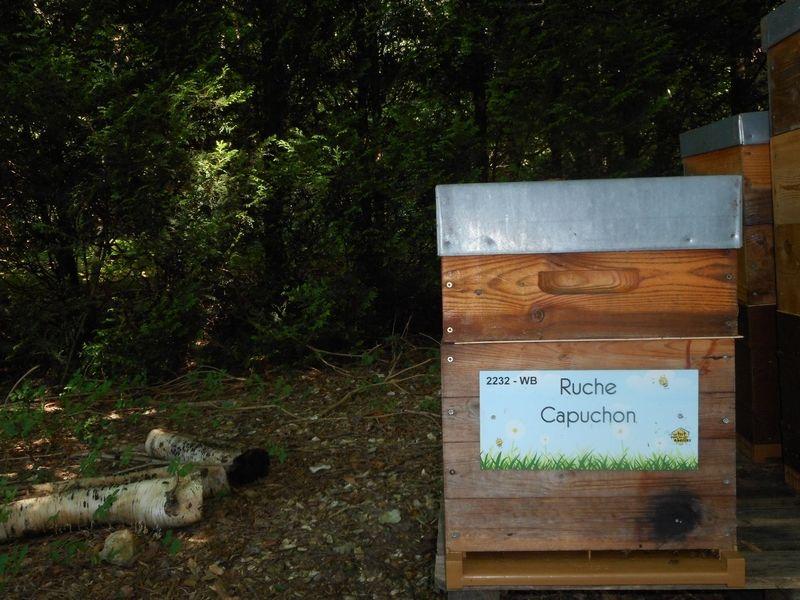 La ruche Capuchon