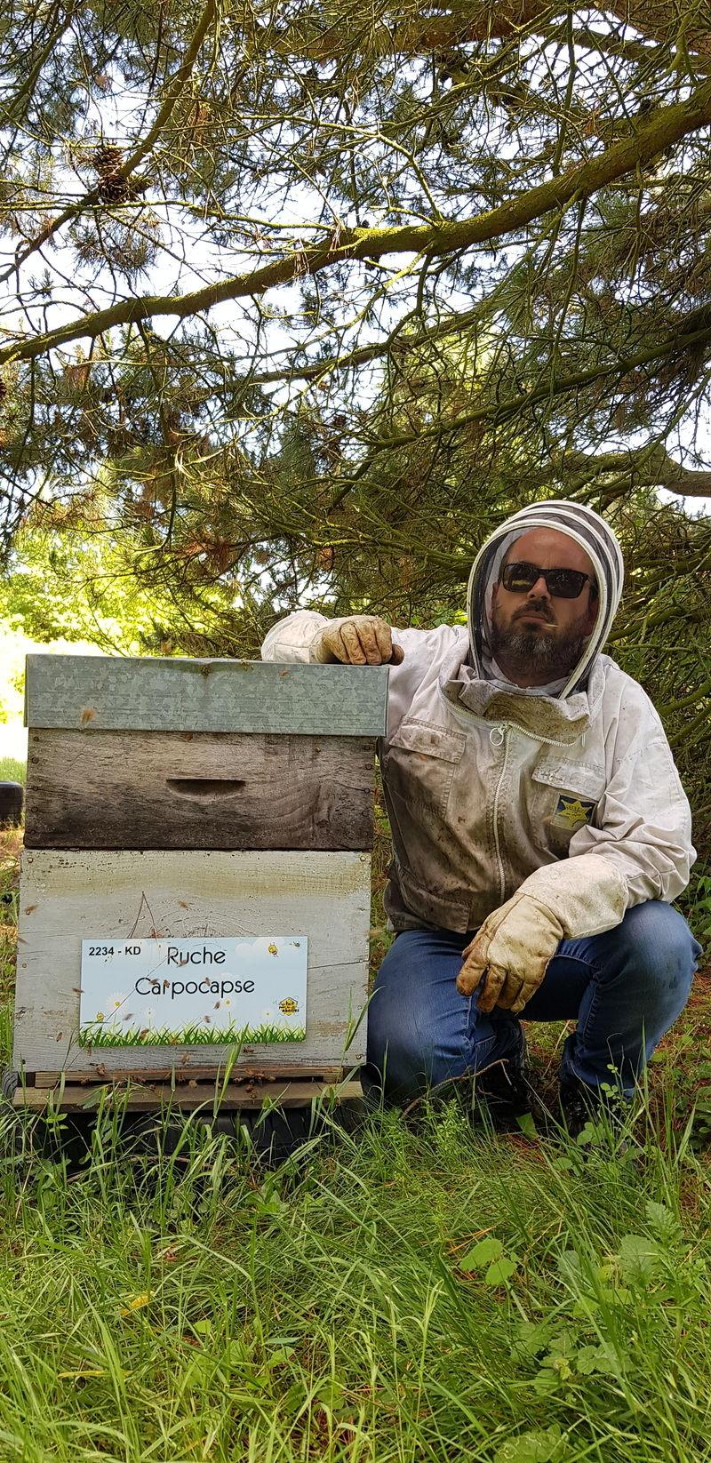La ruche Carpocapse