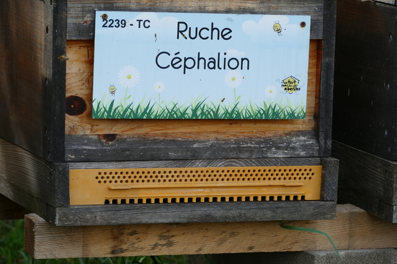 La ruche Céphalion