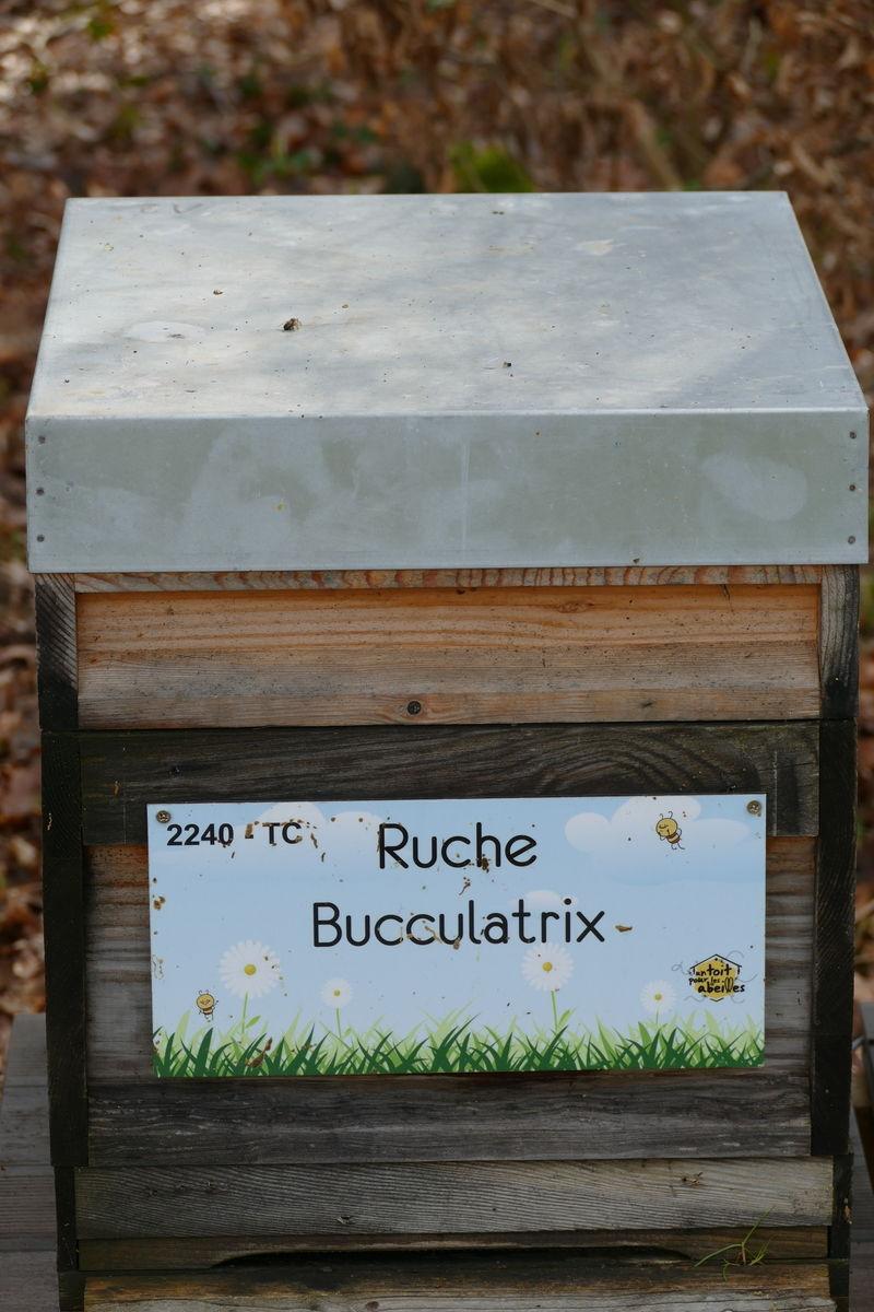 La ruche Bucculatrix