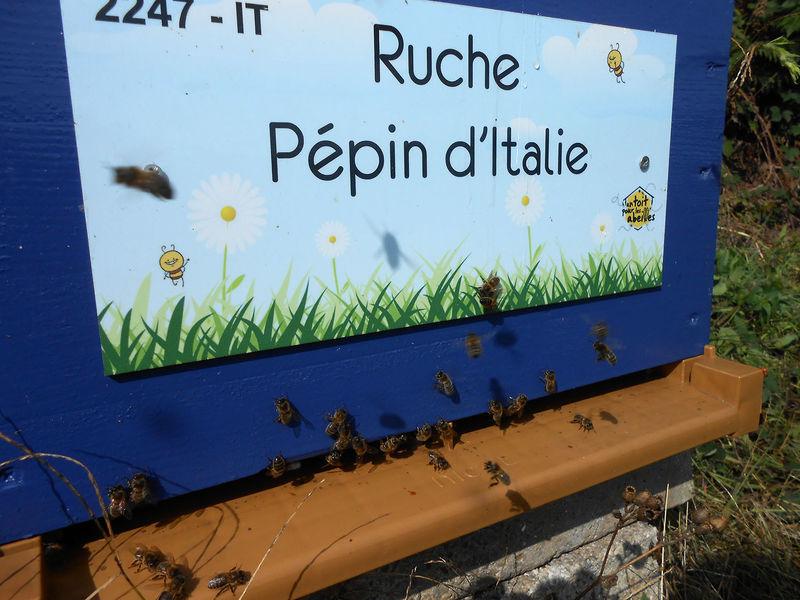 La ruche Pépin d