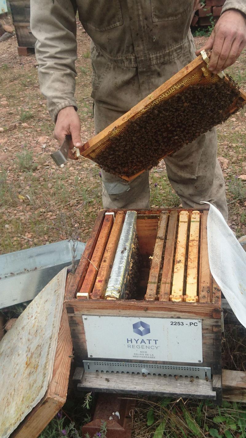 La ruche HYATT REGENCY NICE PALAIS DE LA MEDITERRANEE
