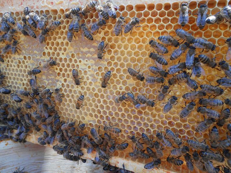 La ruche LEROY MERLIN MANTES BUCHELAY