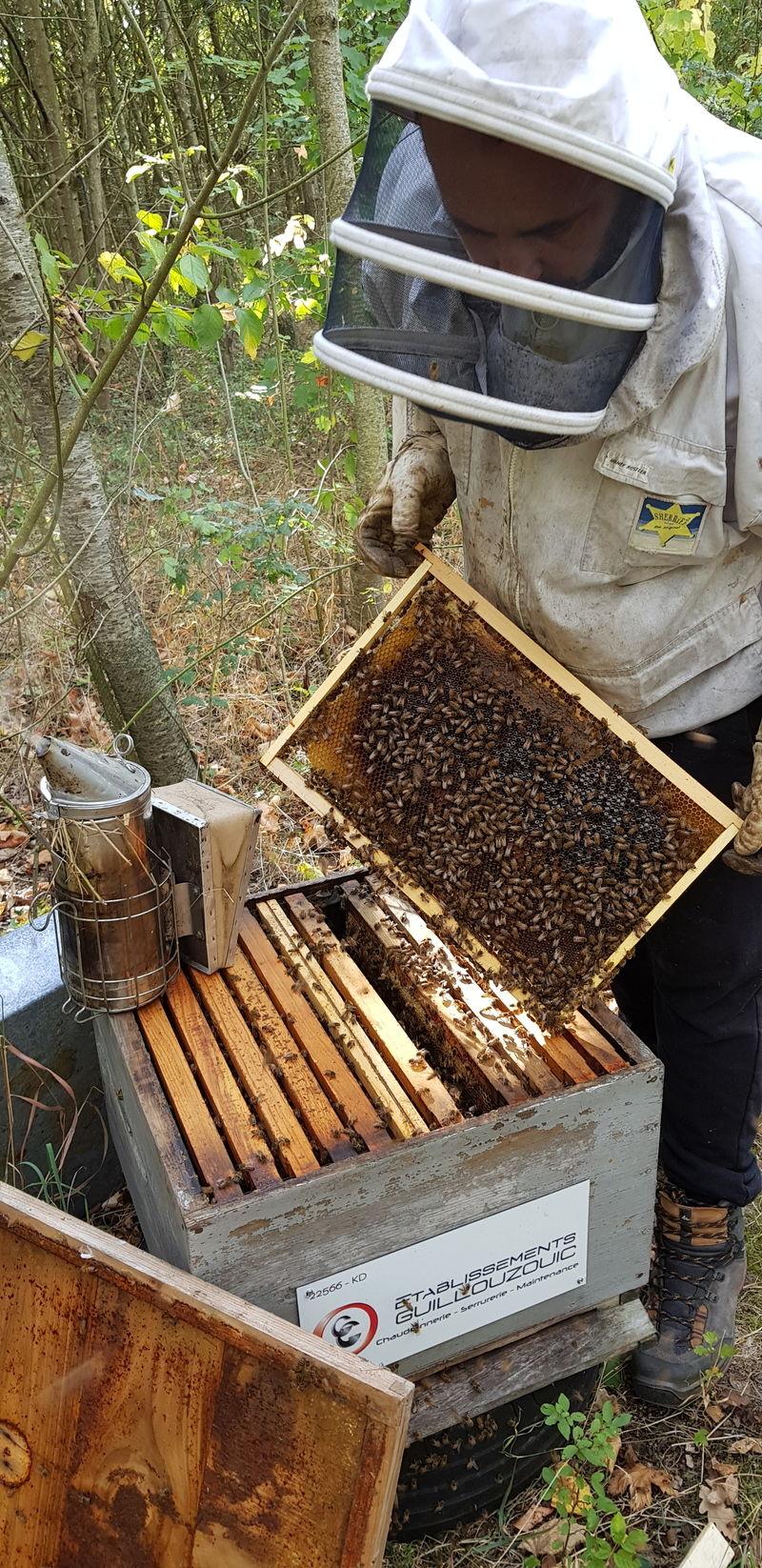 La ruche Ets guillouzouic