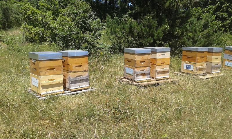La ruche MFIF