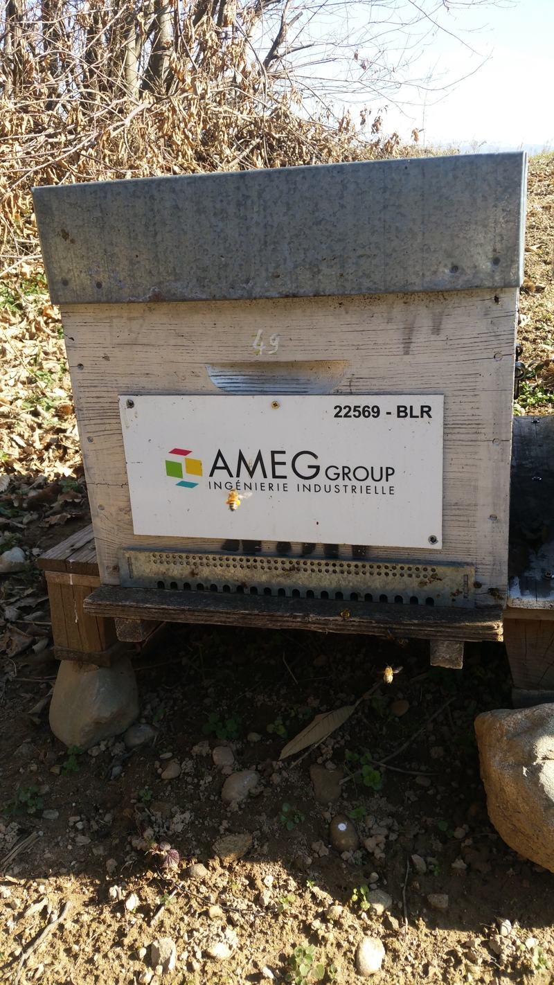La ruche AMEG GROUP