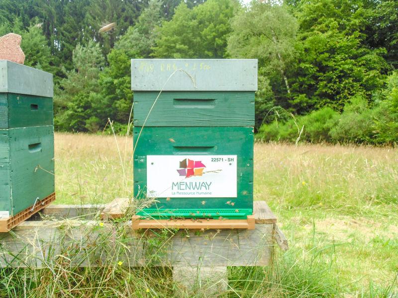 La ruche Menway