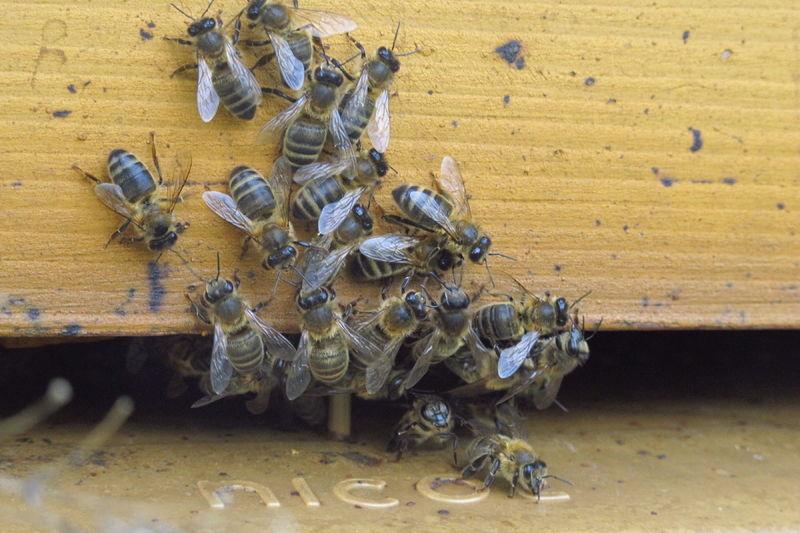La ruche Penta