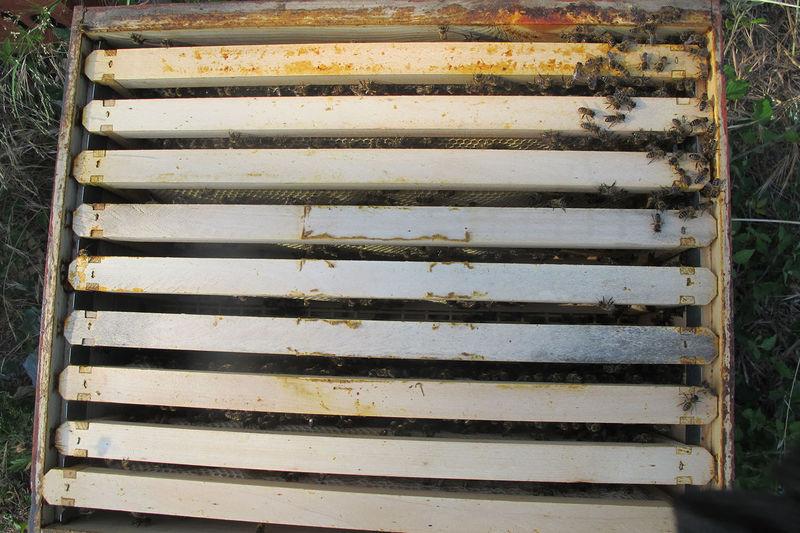 La ruche San Colombano