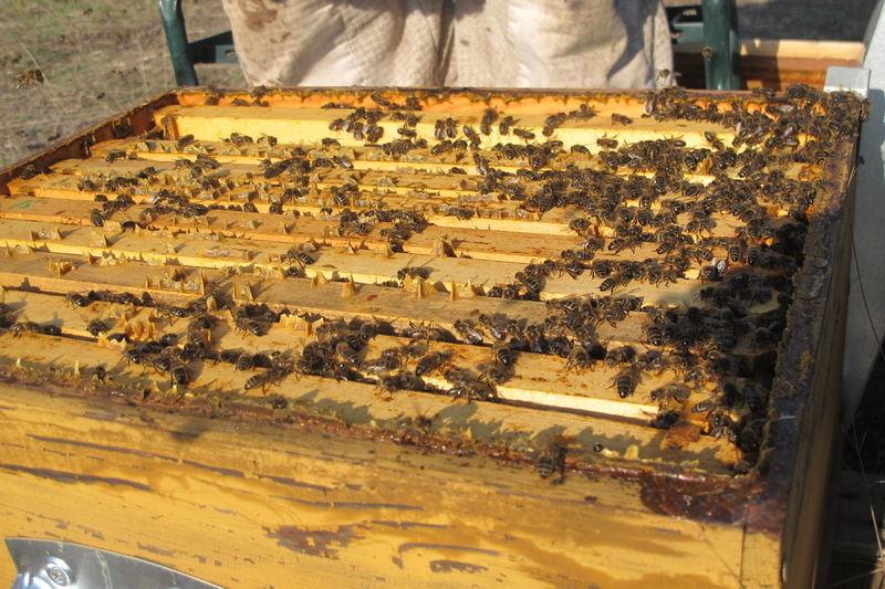 La ruche Noce