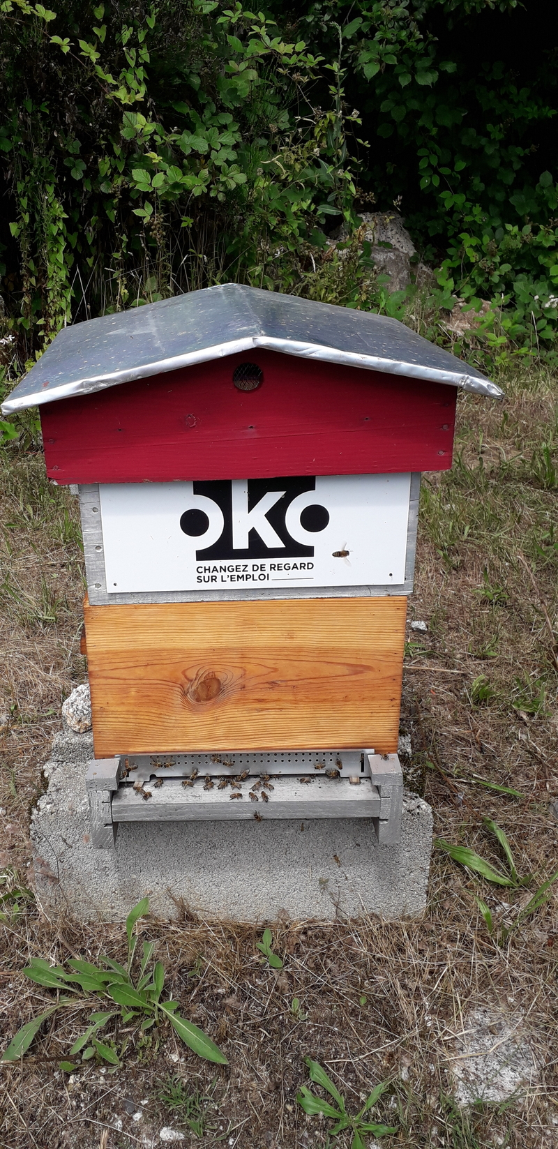 La ruche OKO