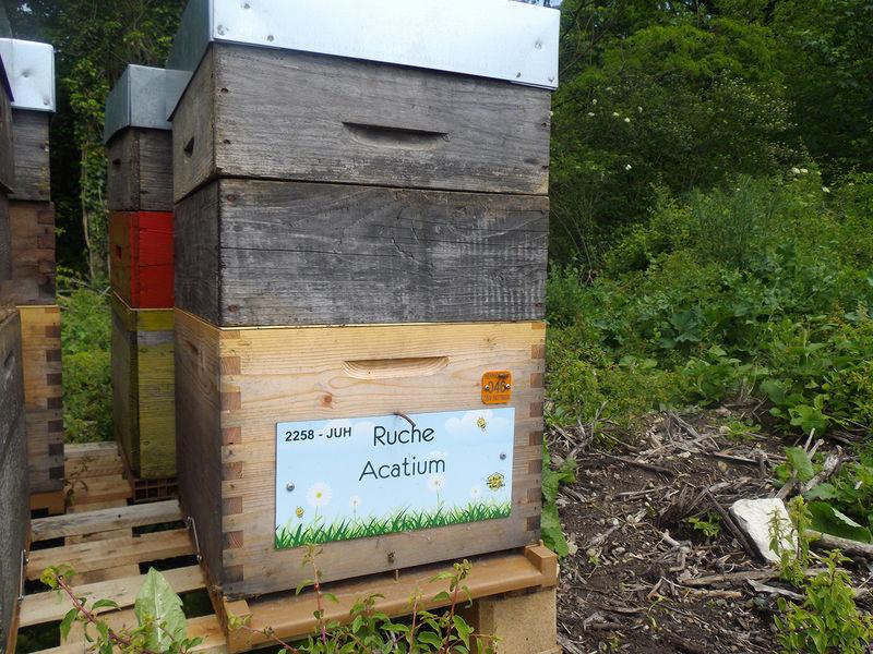 La ruche Acatium