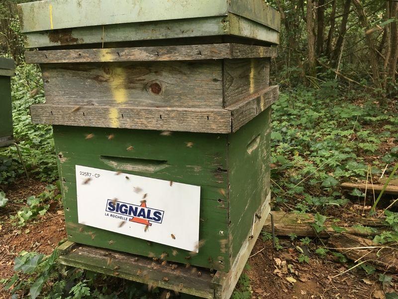 La ruche SIGNALS