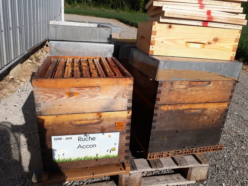 La ruche Accon