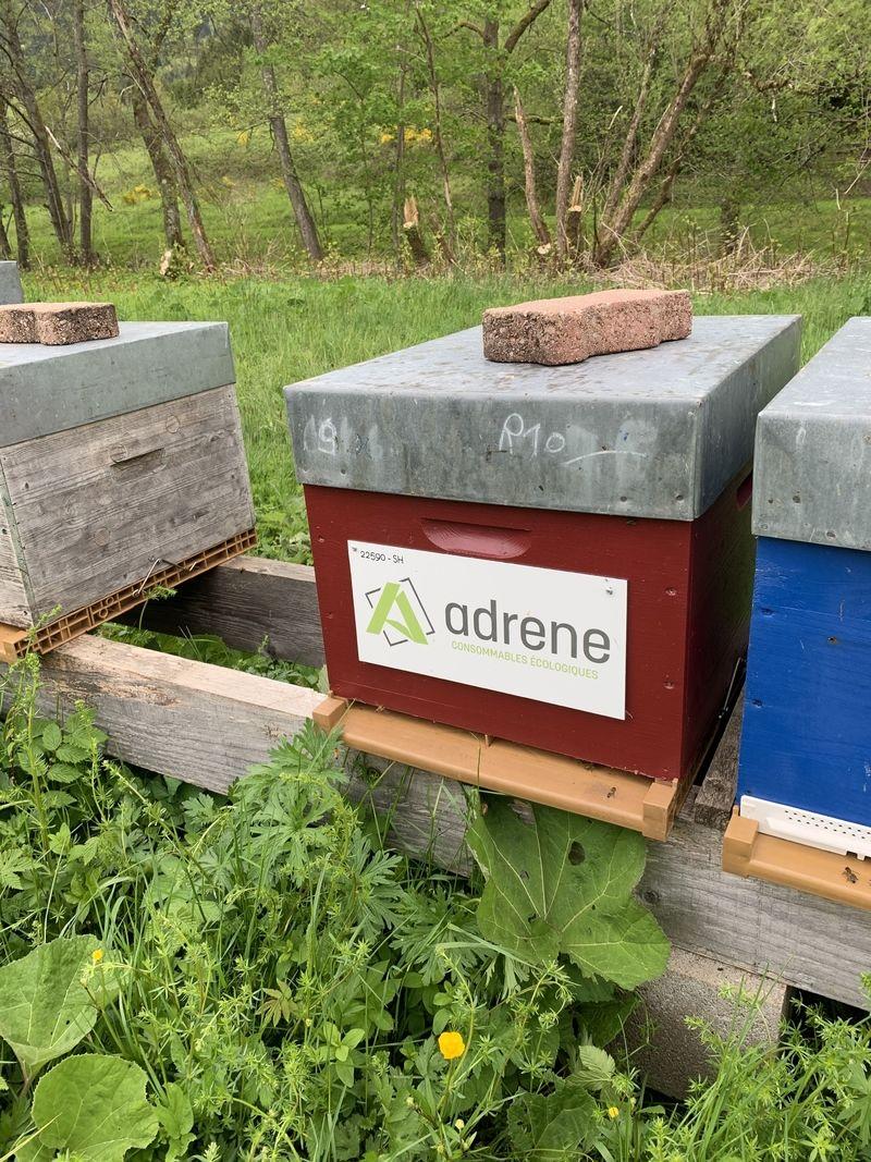La ruche adrene