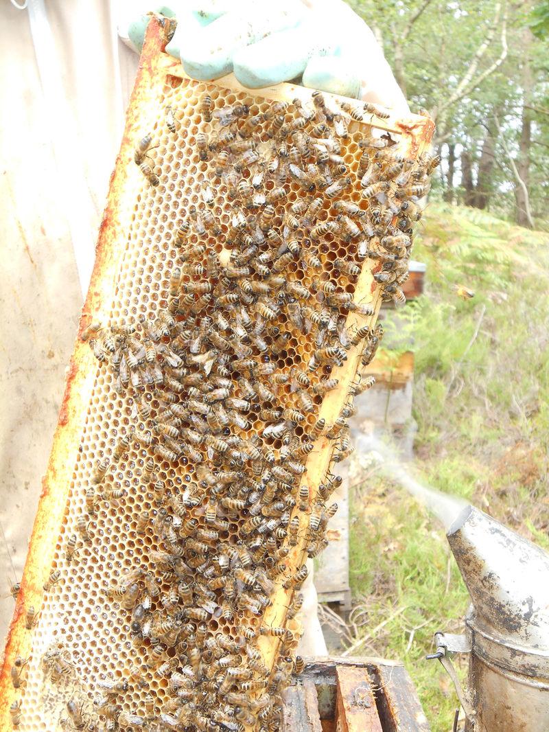 La ruche Actuaire