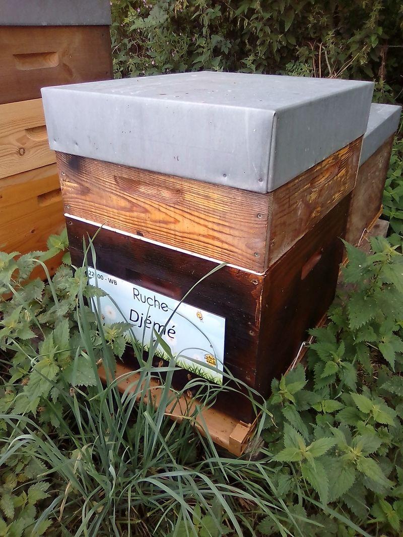 La ruche Djemé