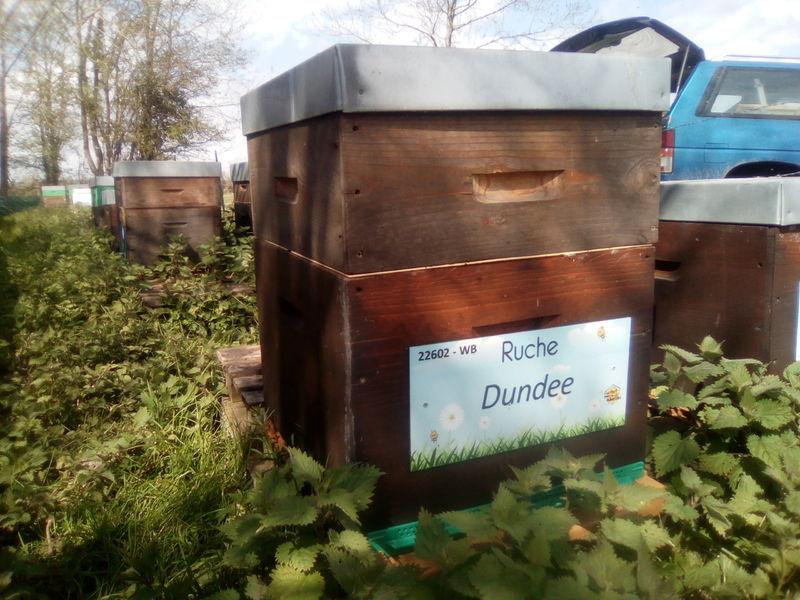 La ruche Dundee