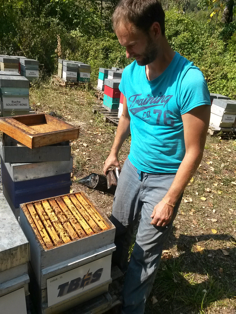 La ruche TBES