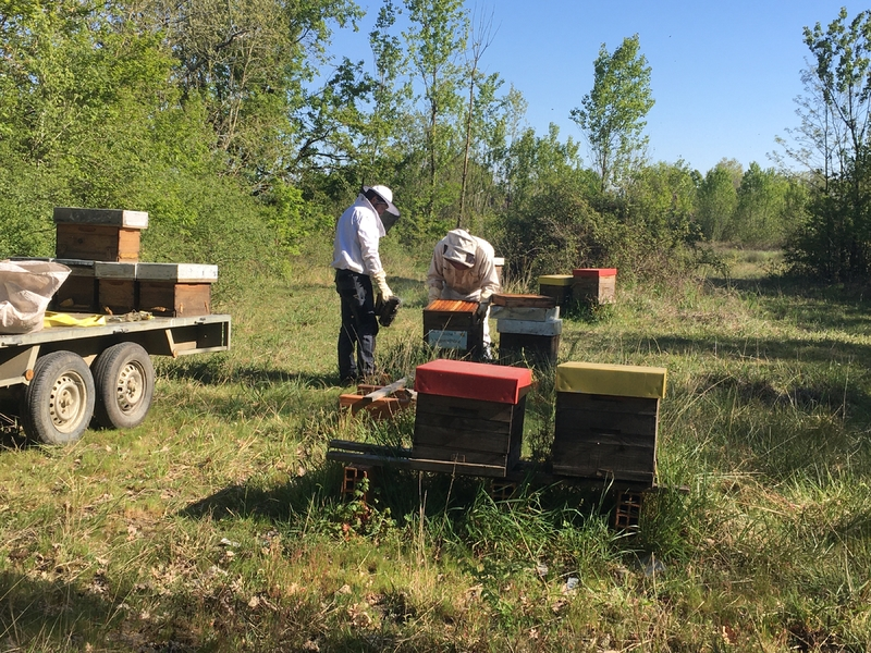 La ruche Actuariole