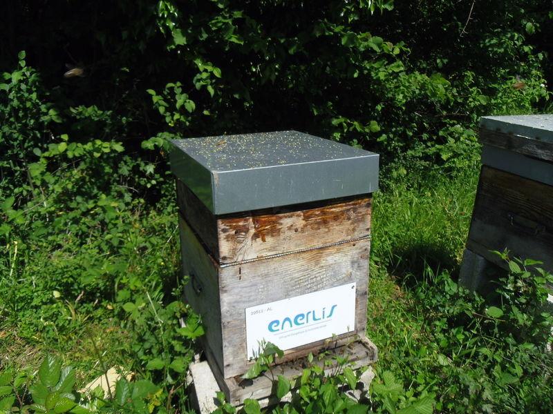La ruche ENERLIS