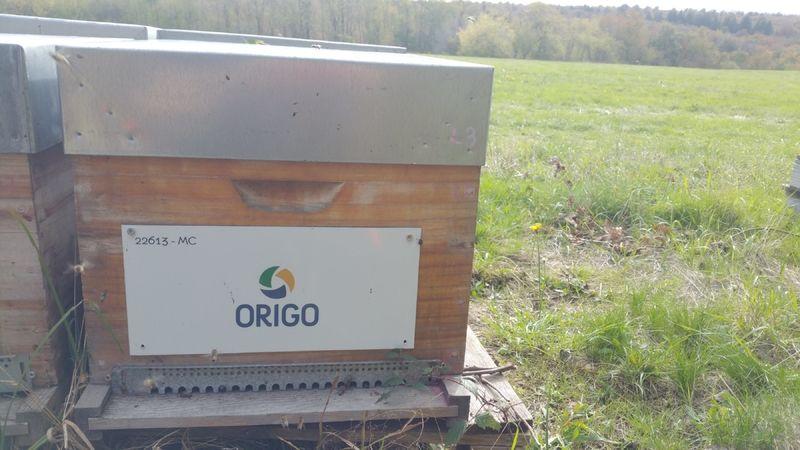 La ruche Origo