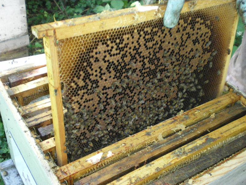 La ruche Allège