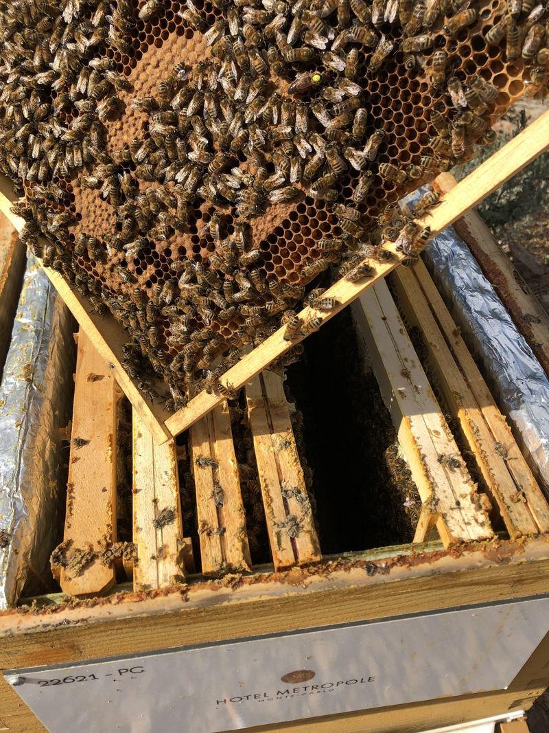 La ruche HOTEL METROPOLE MONTE CARLO