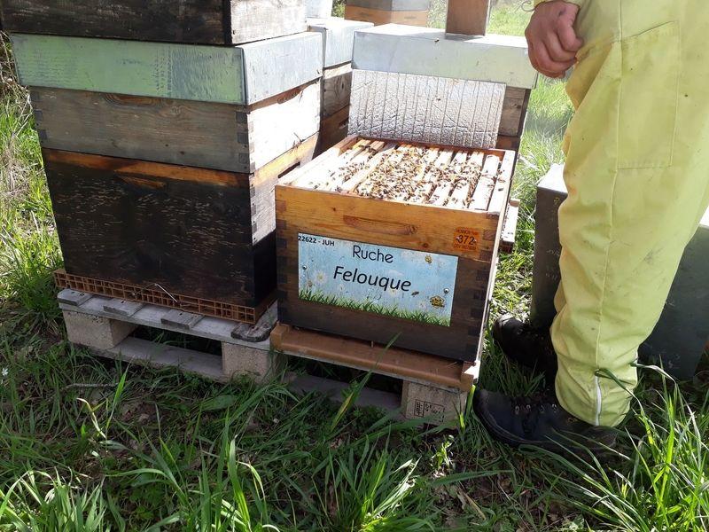 La ruche Felouque