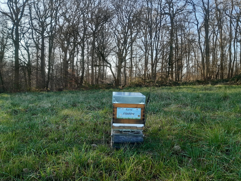 La ruche Filadière