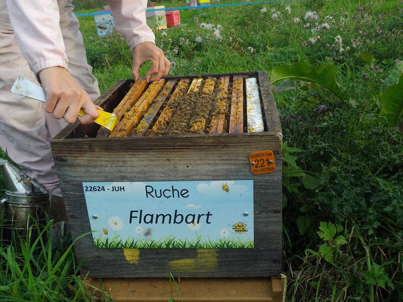 La ruche Flambart
