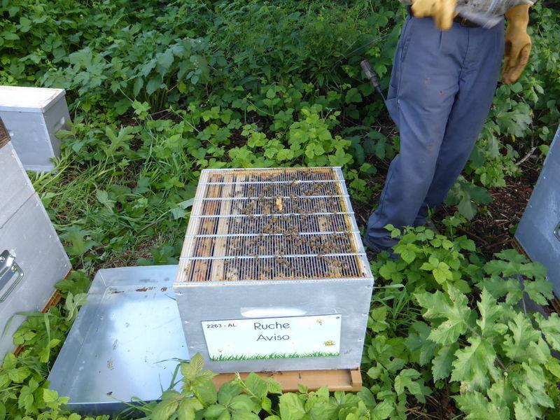 La ruche Aviso