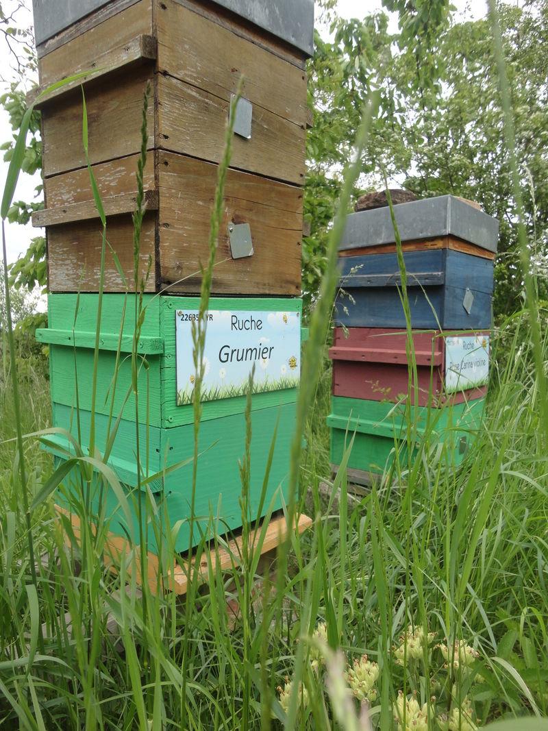 La ruche Grumier