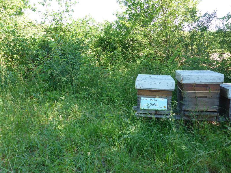 La ruche Gulet