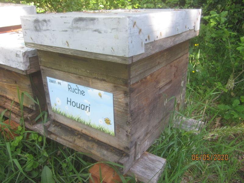 La ruche Houari