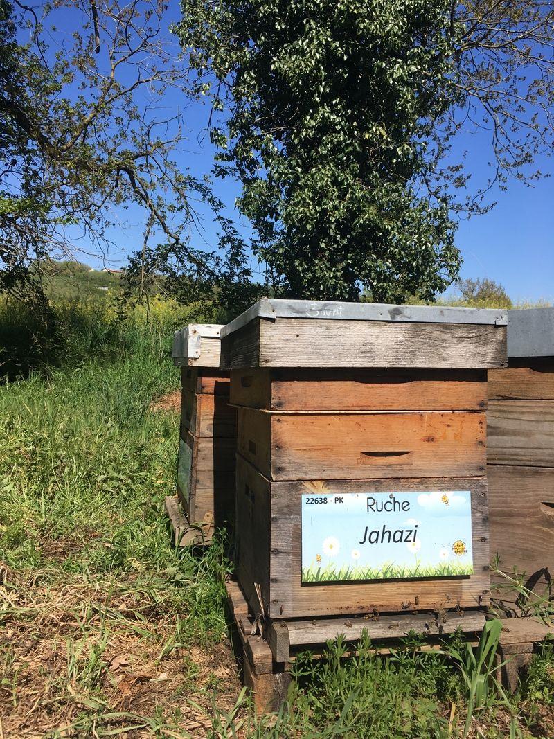 La ruche Jahazi