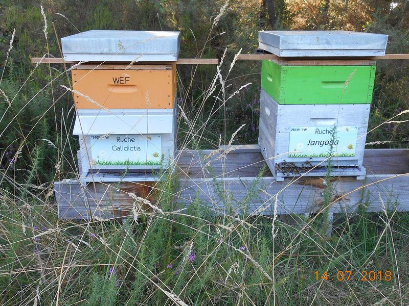 La ruche Jangada