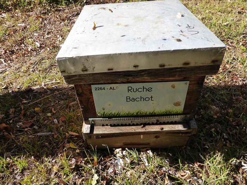 La ruche Bachot