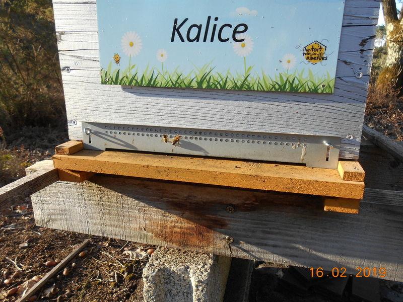 La ruche Kalice