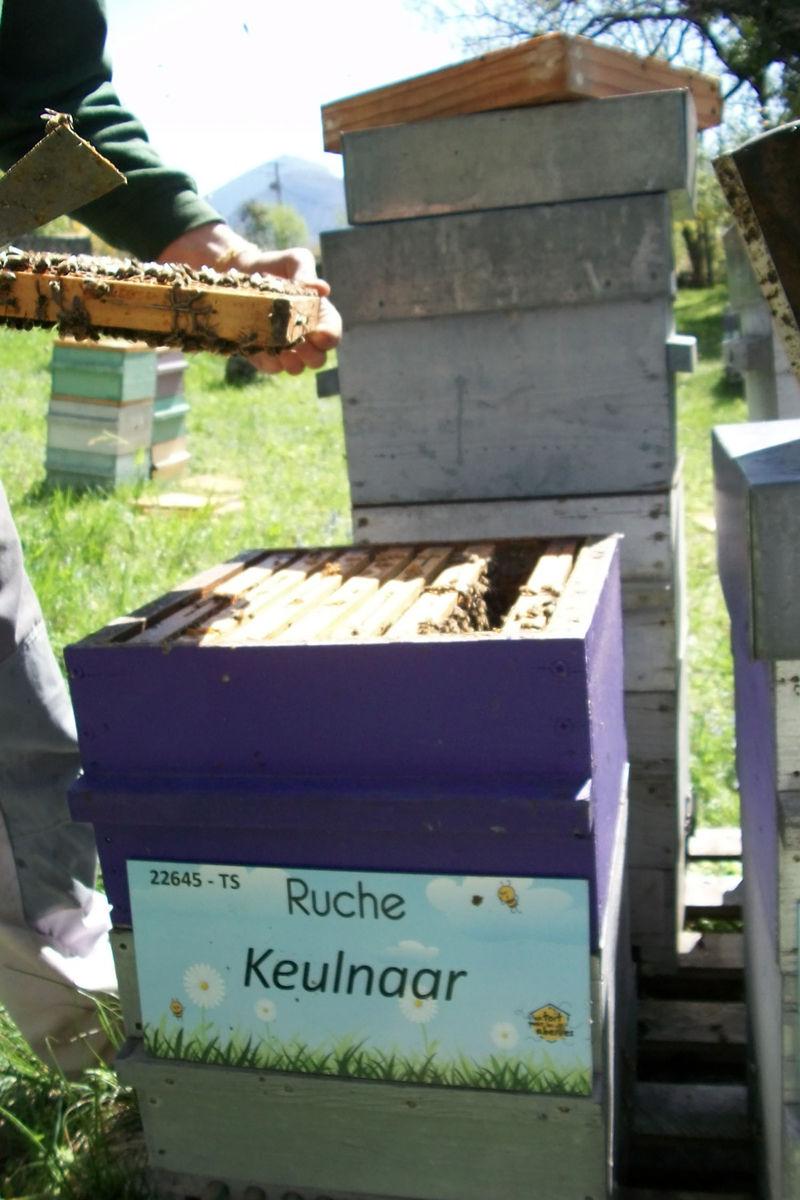 La ruche Keulnaar