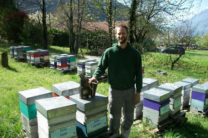La ruche Lambo