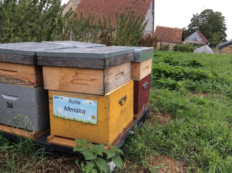 La ruche Menaïca