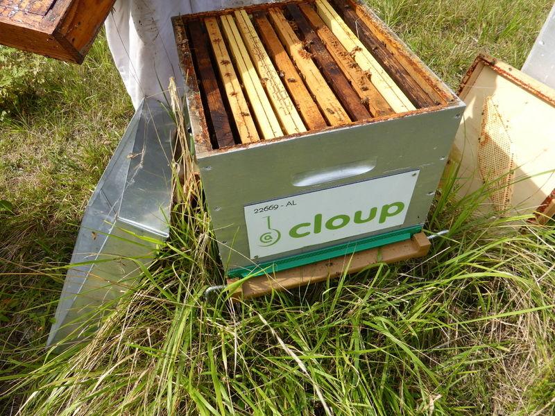 La ruche CLOUP